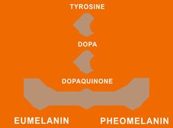 MELANOGENESI